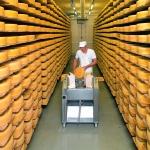 Appenzeller Käse - würziger Genuss garantiert