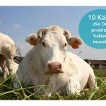 10 Käse, die Du probiert haben musst!